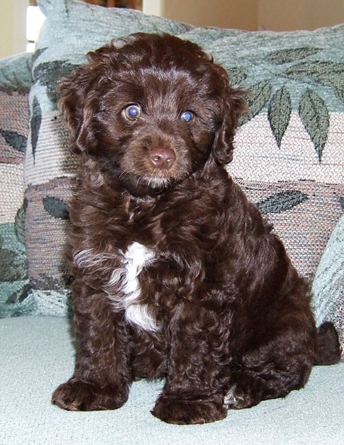 Charlie as a Baby
